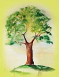 Baumis Baum